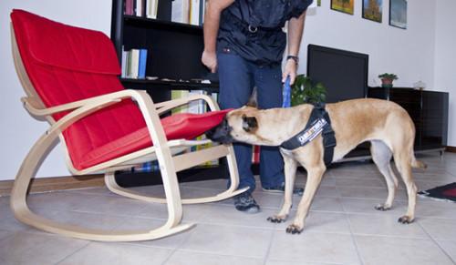 servizi sedia