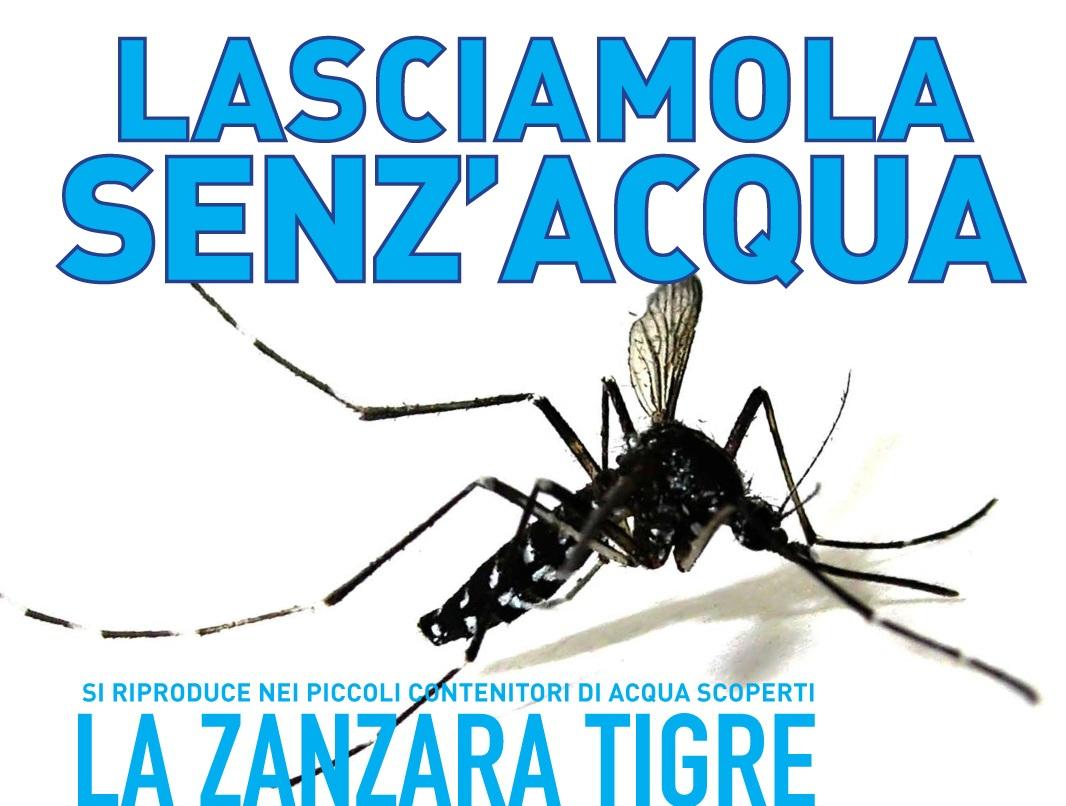 Copia di zanzara-tigre_campagna2008_prewiev