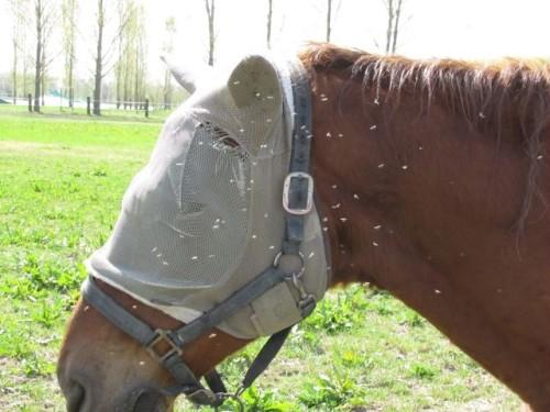 Simulide - su cavallo