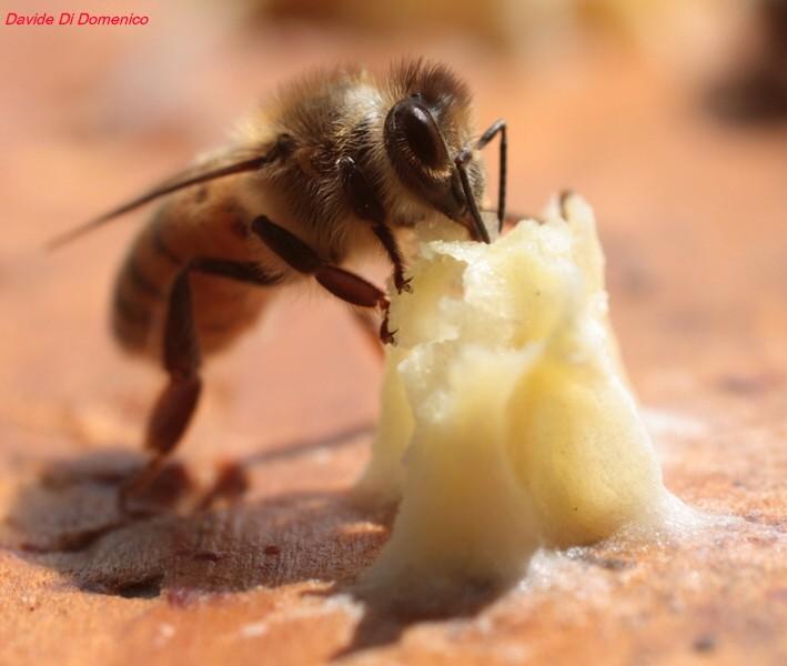 ape - foto Davide Di Domenico