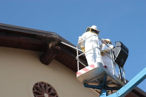 cattura delle api in altezza mediante aspirazione