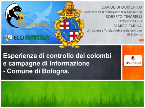 Di Domenico 02